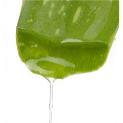 Inside Aloe Vera Leaf