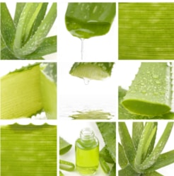 Aloe Vera HQ Products