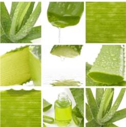 Aloe Vera HQ Products
