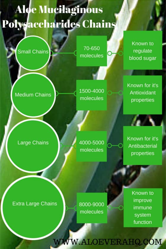 Aloe Mucilaginous Polysaccharide chain lengths