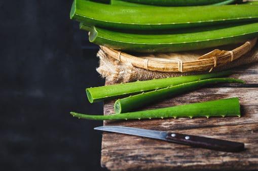 Aloe Leaf Cutting